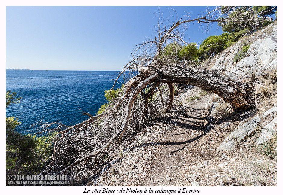 La Côte Bleue désigne la portion de côte méditerranéenne située à l'ouest de Marseille, jusqu'à l'embouchure de l'étang de Berre. C'est la bordure maritime des communes du Rove, d'Ensuès-la-Redonne, de Carry-le-Rouet, de Sausset-les-Pins