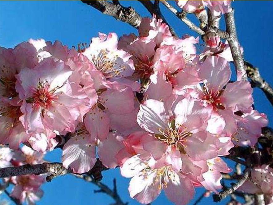 Regard sur le petit monde des arbres et plantes qui donnent des fruits. Les petits malins trouveront ici la réponse à certaines questions posées dans des articles.