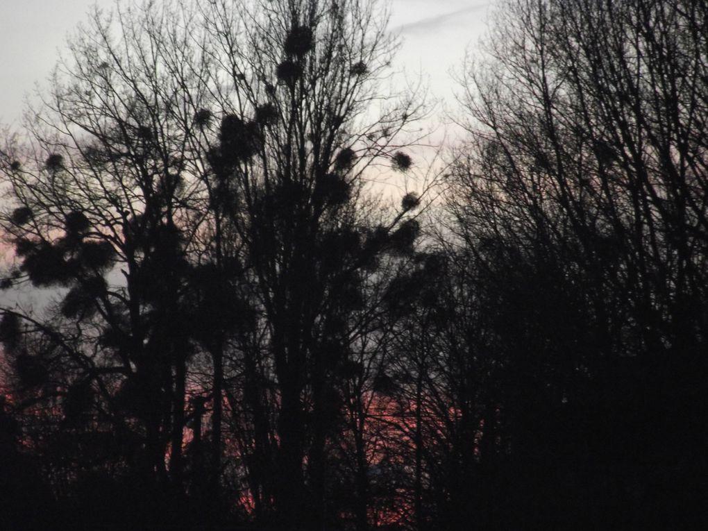Album - Fevrier-2014