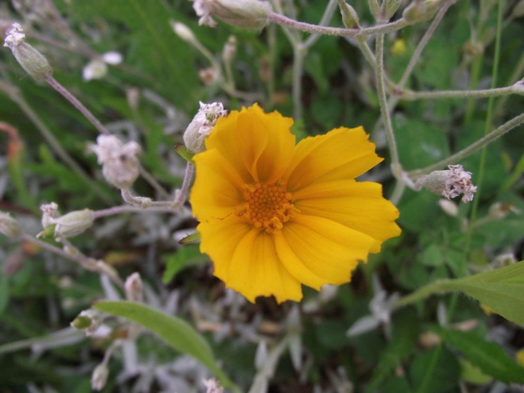 Juin 2012 jardin de Savigné sur Lathan