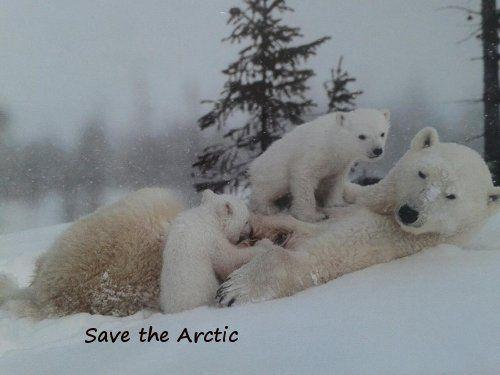 Album - SAVE-THE-ARCTIC