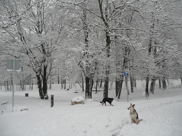décembre 2010 commence bien blanc