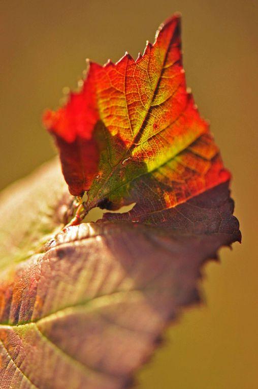 Album - Couleurs d'automne