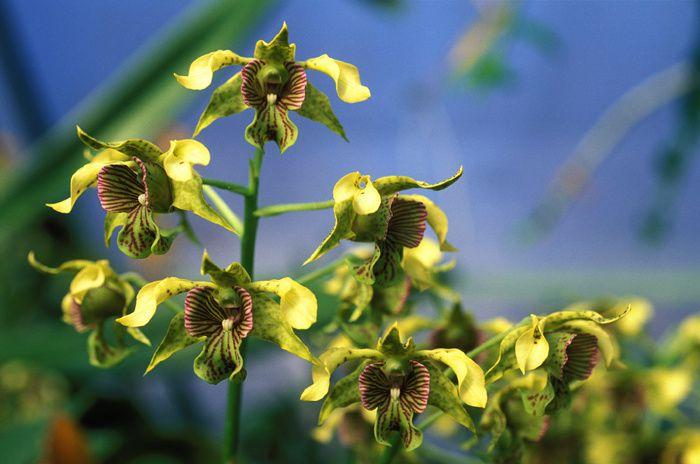 Petit choix de photos d'orchidées pour faire un peu la nique à Gérard,car certaines sont des fleurs de zone froide qu'il ne peut pas cultiver chez lui.