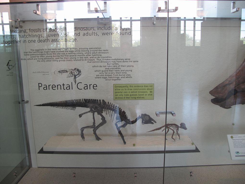 Jean-Claude a eu la chance d'aller au muséum d'histoire naturelle de New York en septembre 2009. Ce musée magnifique a d'immenses galeries d'animaux, qu'ils soient fossiles ou naturalisés, la visite vaut le coup d'œil…