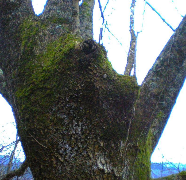 Album - La-nature-insolite-Arbres