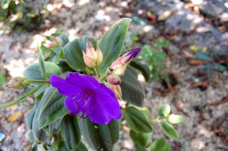 Album - Plantes-d-orangerie