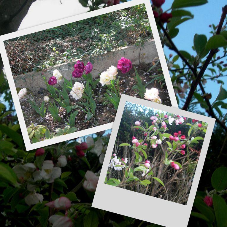 Album - fleurs d ici et d ailleurs