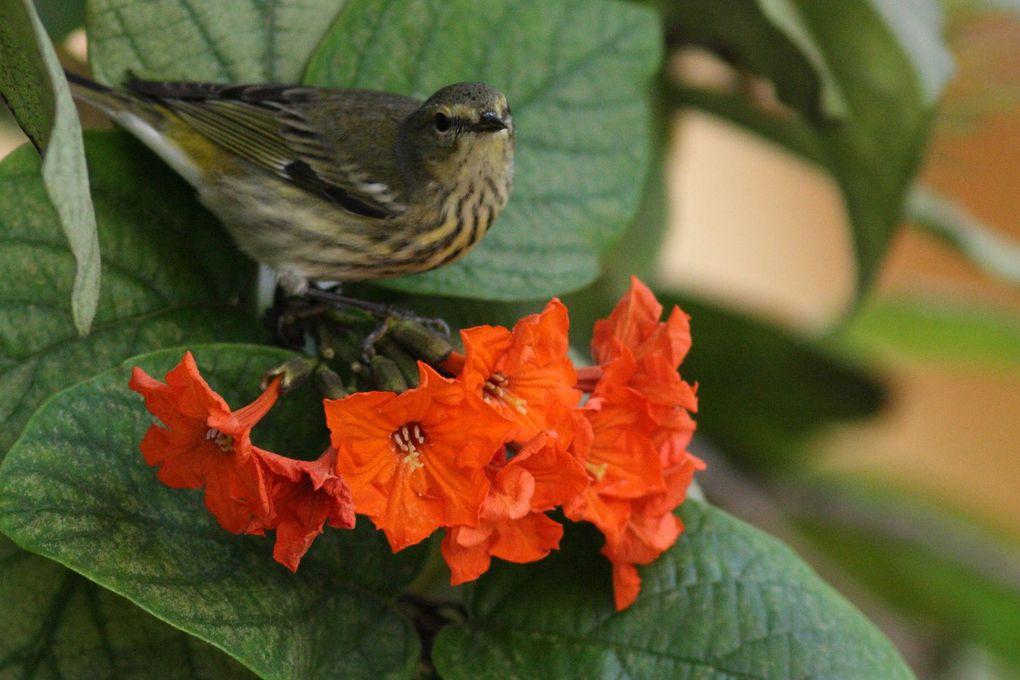 Album - oiseaux et papillons de cuba CUBA