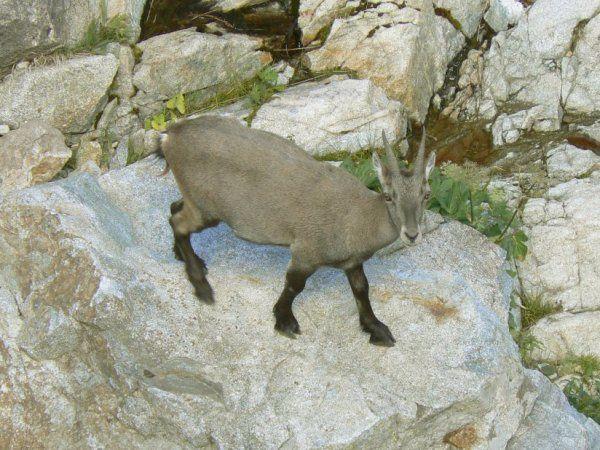 Album - animaux-des-Alpes