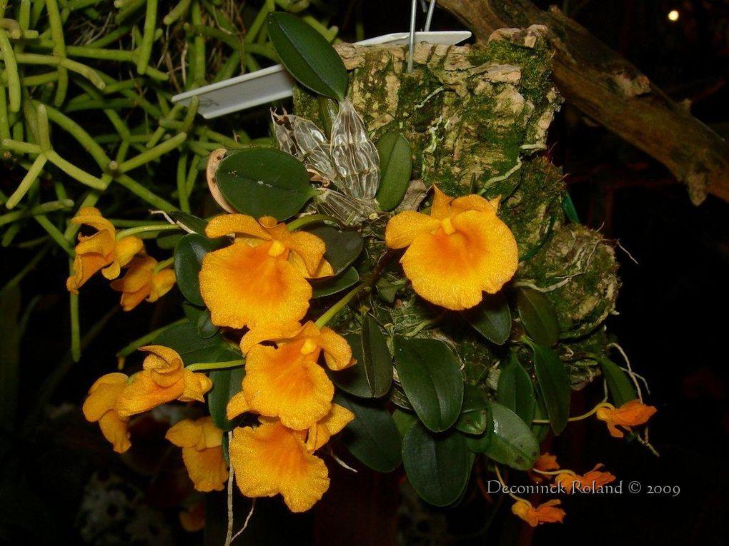 des orchidées photographiées lors de l'exposition au Bois_du_Cazier en Belgique
