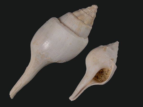 Album - fossiles-eocene