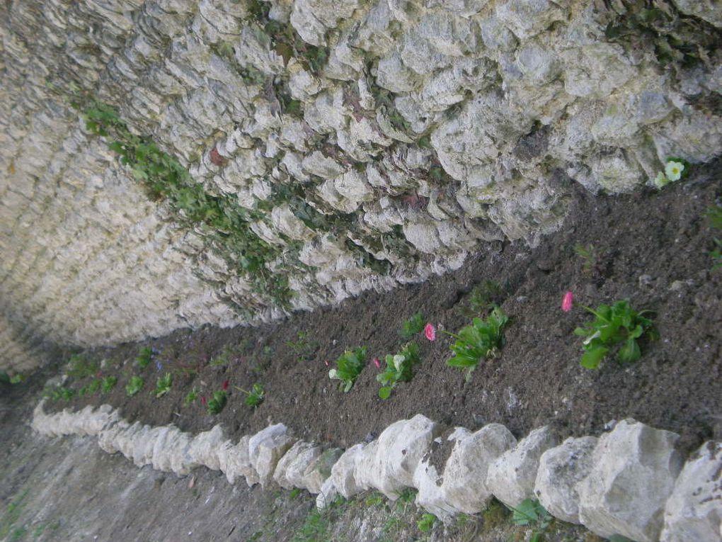 Présentation des extérieurs autour de la maison : vigne, jardin, espaces verts, granges, ancien poulailler, etc...