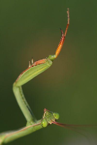 Album - Insectes divers