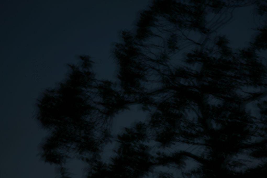 24 avril - 1er juin 2009Grand PalaisDimanche 31 mai 2009