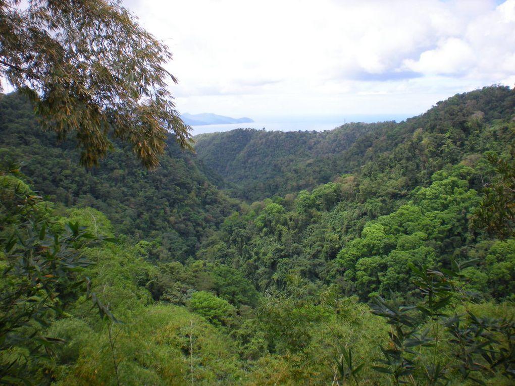 Album - Martinique 2011---Flore