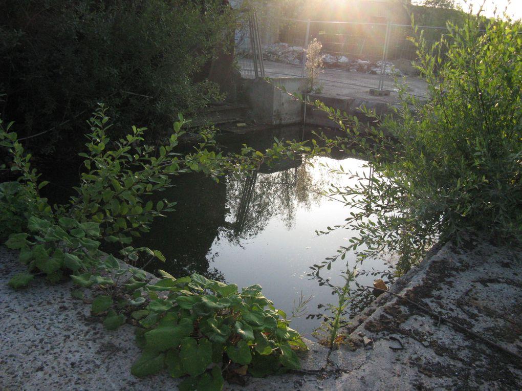 """Mieux vaut ne pas se tremper dans ces """"Dark pools"""" qui sont le réceptacle des eaux de ruissellement de l'Affinerie"""