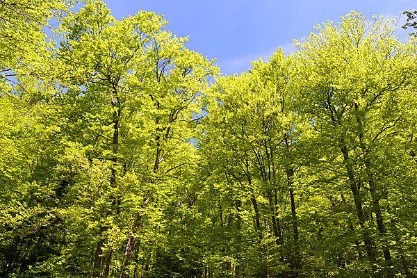 Comme un air de printemps : rennaissance, explosion de couleur, de vitalité, de lumière. En forêt, en plaine ou sur les sommets, il garde son charme unique par sa force qu'il  transmet à qui se laisse prendre au jeu de l'émerveillement.