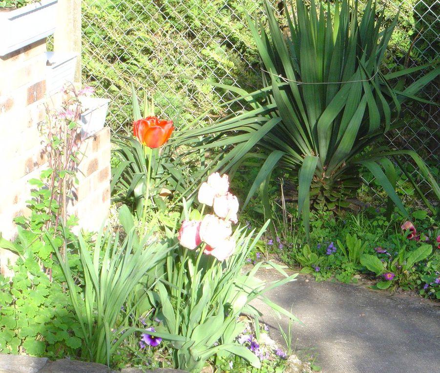 Album - Ma-maison--mon-jardin