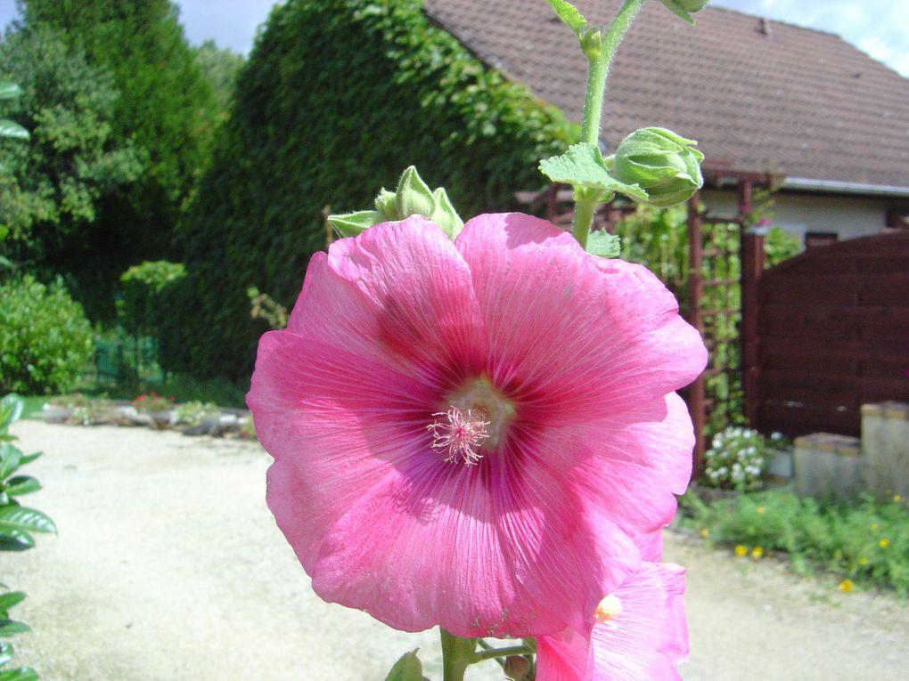 Album - Mes-fleurs-2011