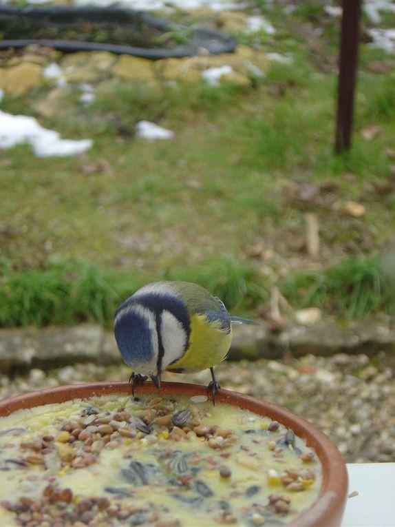 Mes photos d'oiseaux