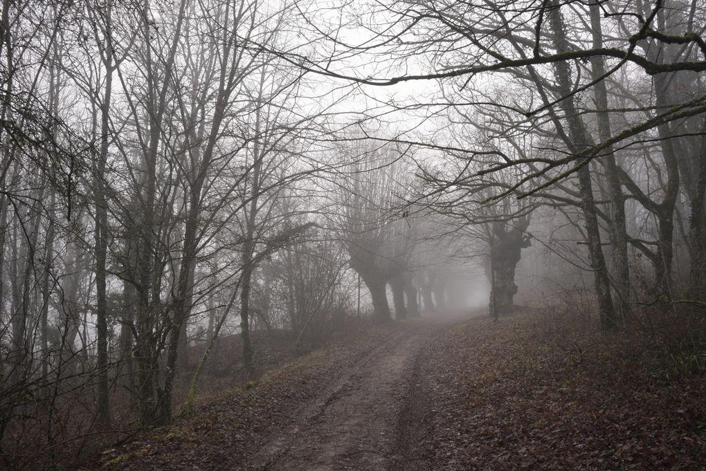 Allée des Tilleuls, Couchey, Côte d'Ordécembre 2013