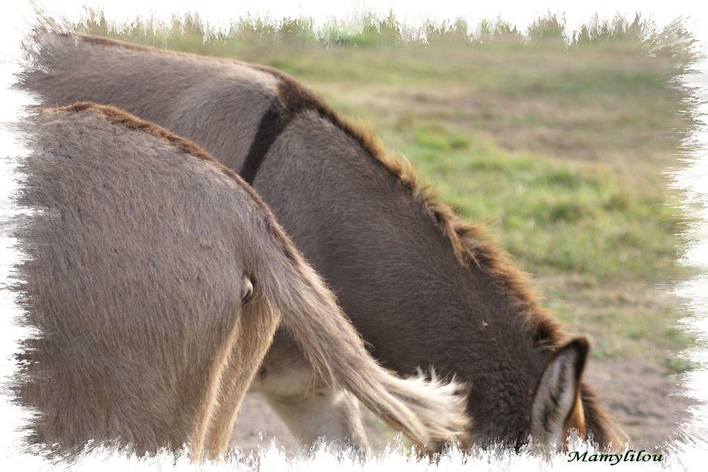 Etre bête comme un âne: un dicton qui ne serait toujours pas prouver , à mon avis..Plaisir de partager ces photos pour tous ceux qui leur prêtent attention