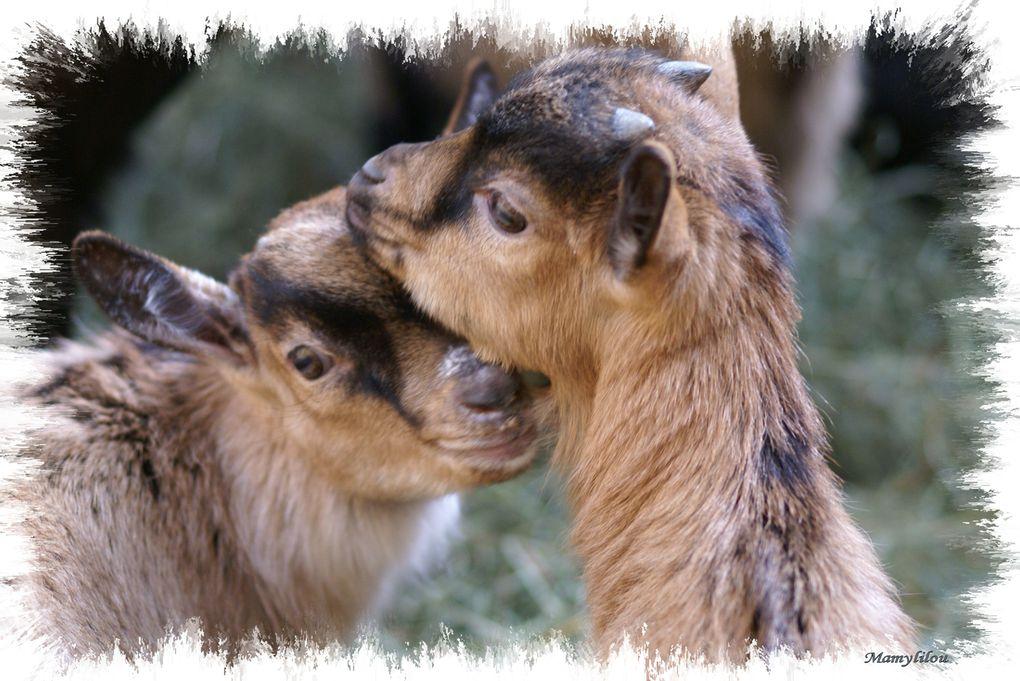 Prise de vues essentiellement réalisées dans un parc animalier , ou chaque animal est apprivoisé et marque une docilité face à l'adulte ou l'enfant qui s'en approche..