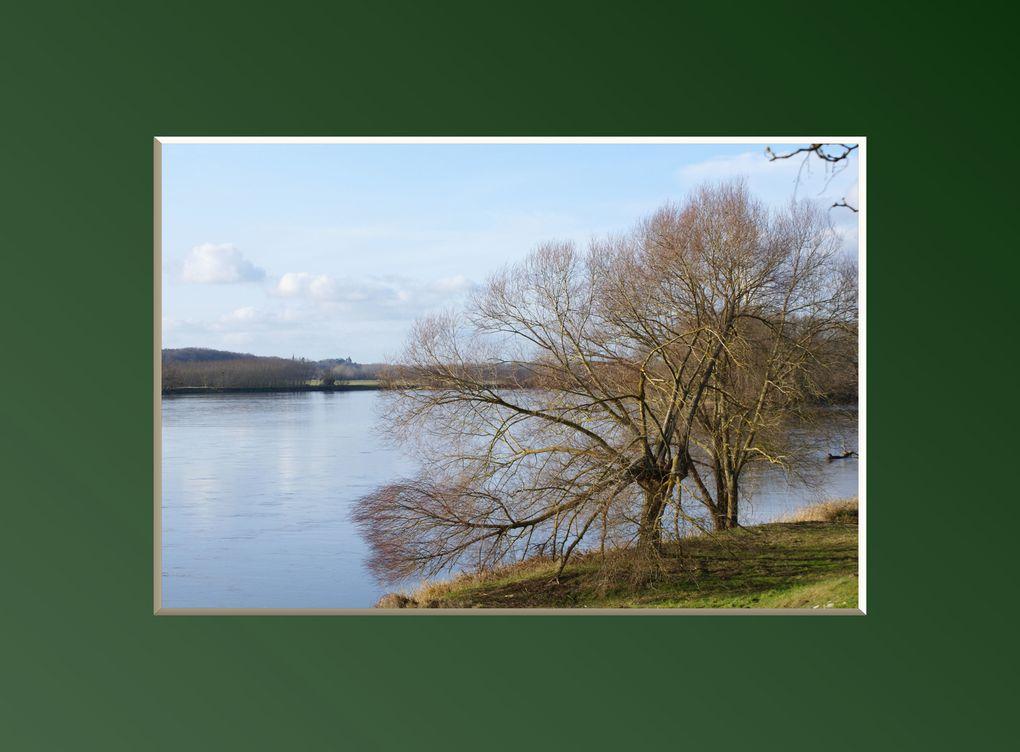 Il y a deux sortes d'arbres: les hêtres et les non-hêtres : citation de Raymond Queneau qui m'a amusée..Ces photographies ont été prises au hasard de promenades, à l'Arboretum des Barres ,et lors des dernières tempêtes