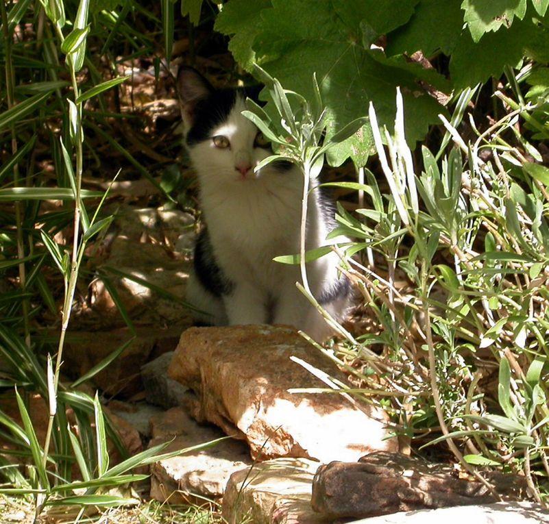 Le jardin est un microcosme où cohabitent oiseaux, insectes, petits mammifères. Rencontres.
