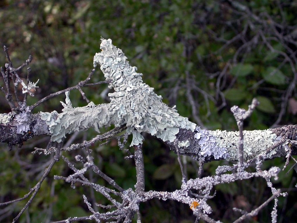 Dans la nature, les bois morts forment parfois de véritables sculptures. Etranges. Inquiétantes. Et quand les mousses s'en mêlent, cela donne des associations surprenantes.