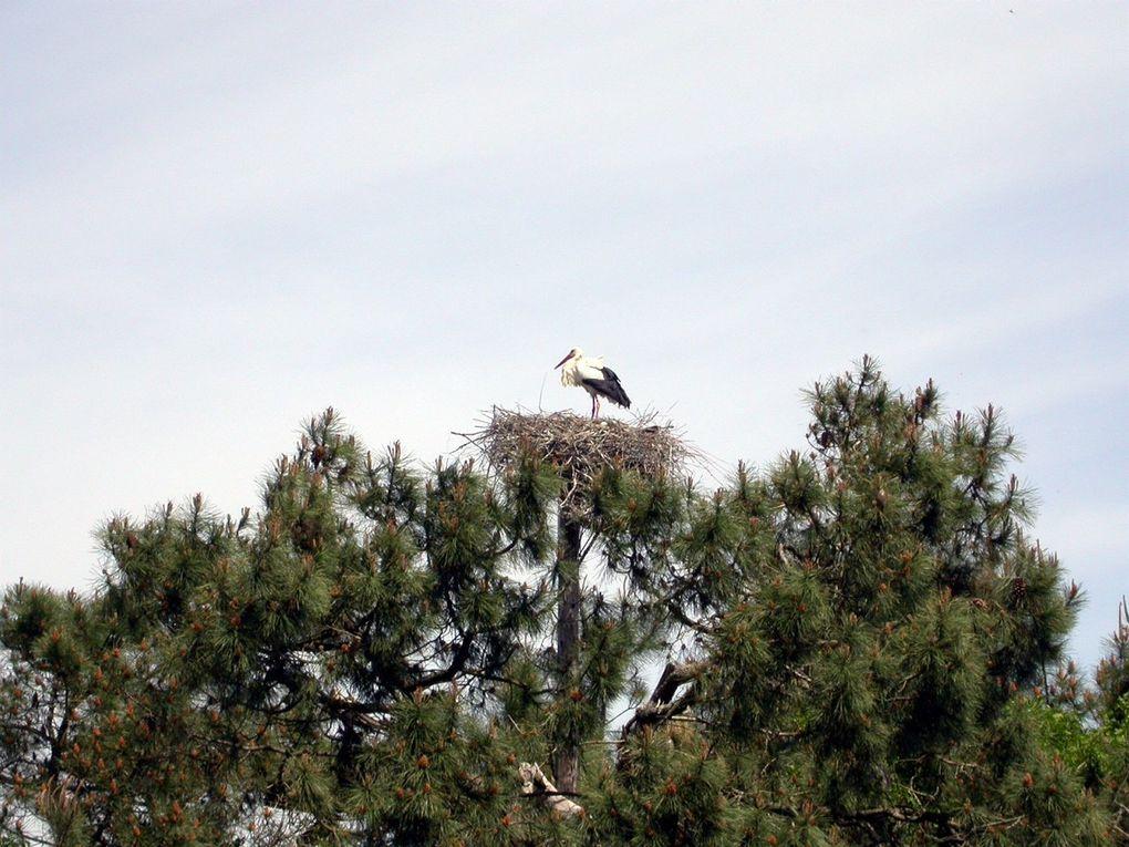A moins d'une heure de Bordeaux, aux portes d'Arcachon, le parc ornithologique du Teich est un lieu privilégié où de nombreuses espèces d'oiseaux migrateurs font escale. Quelques photos prises au cours de la balade qui dure quatre bonnes heures.