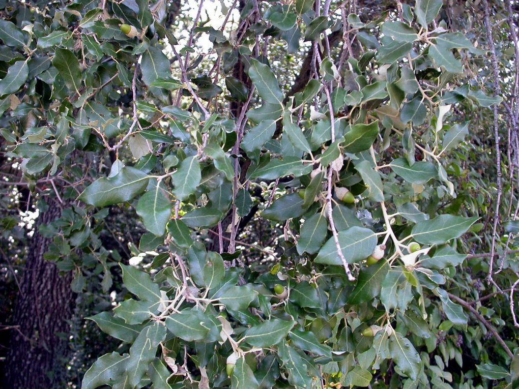 Le bois des Lens (ou Leins) recèle une flore très riche. Voici en photos les principales espèces que l'on y rencontre au fil des saisons.