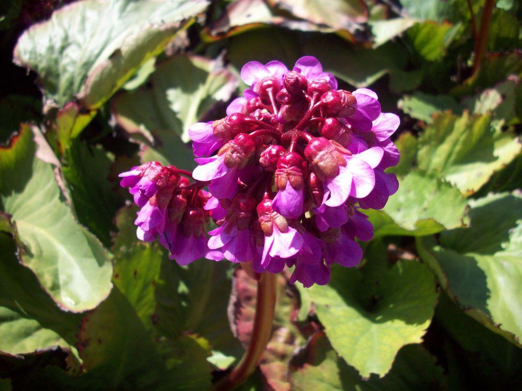 Album - fleur-du-jardin