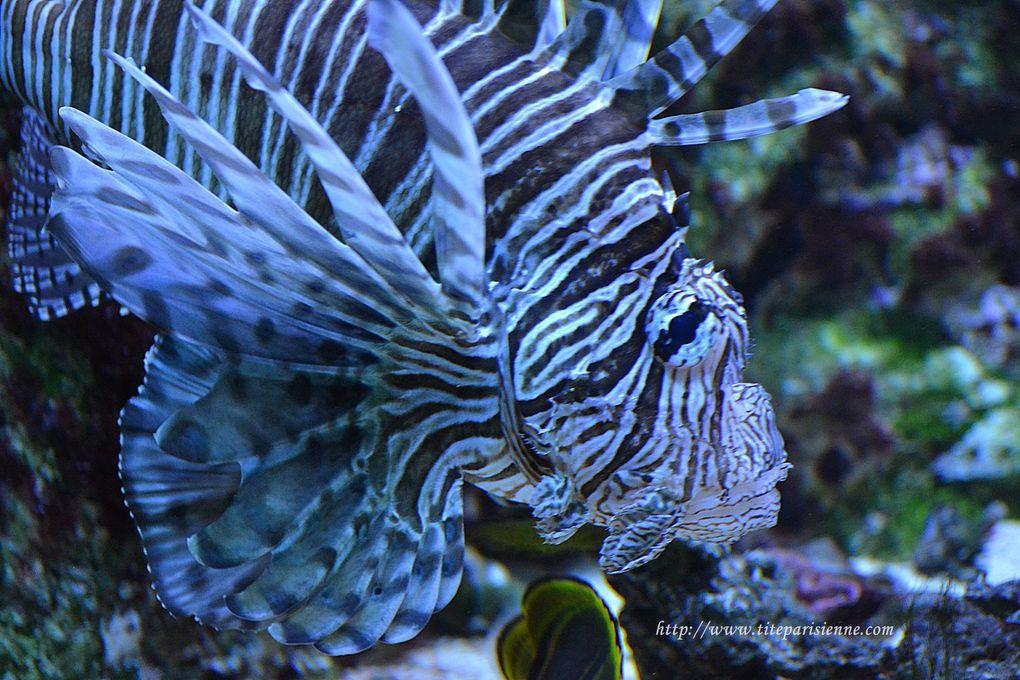 Aquarium de la Porte Dorée Paris 12ème