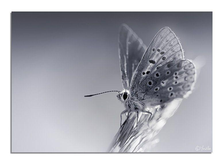 Album - Macros-Papillons