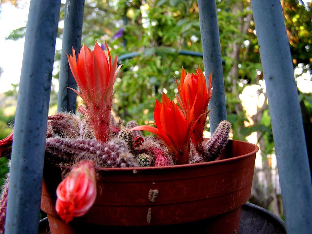 La passion des fleurs n'a pas de frontière et se cultive avec Amour