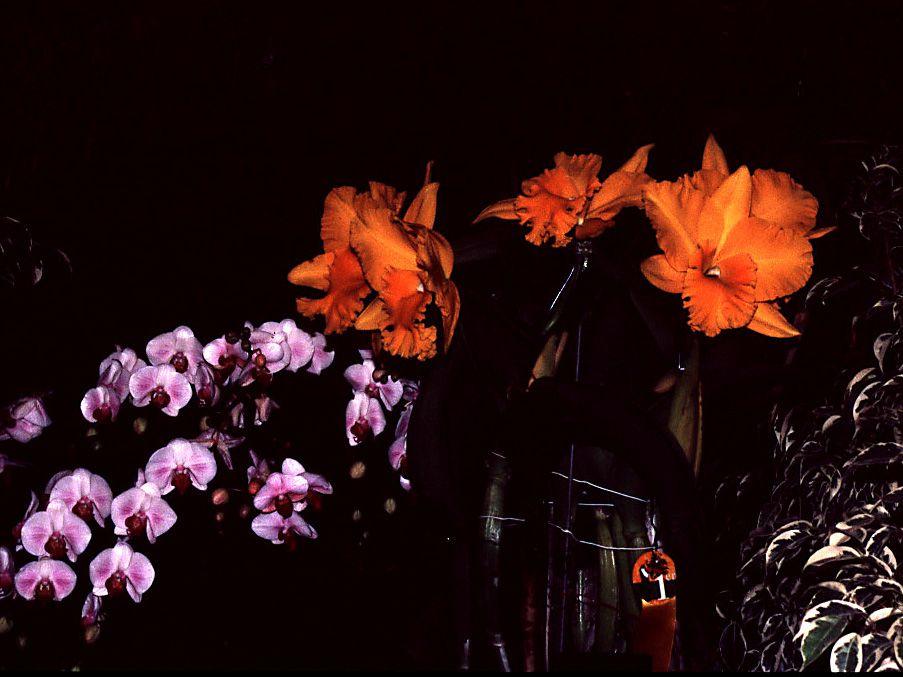 """Nos chemins prennent souvent différents  détours , et la découverte des nouveautés nous motive , les expositions sont pleines de belles surprises , les photos de cet album sont empreintes d'admiration pour """"Ces Belles Tropicales"""""""