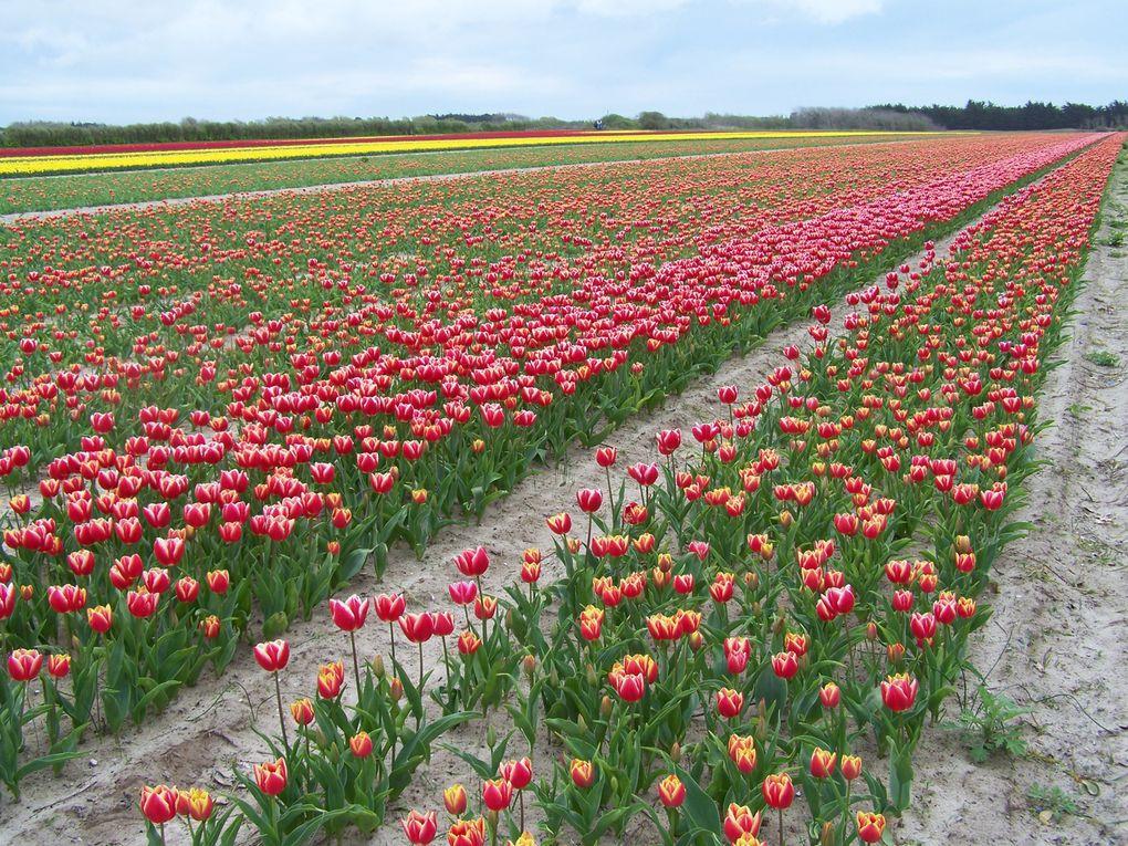 photo des champs de fleurs à LA TORCHE finistère