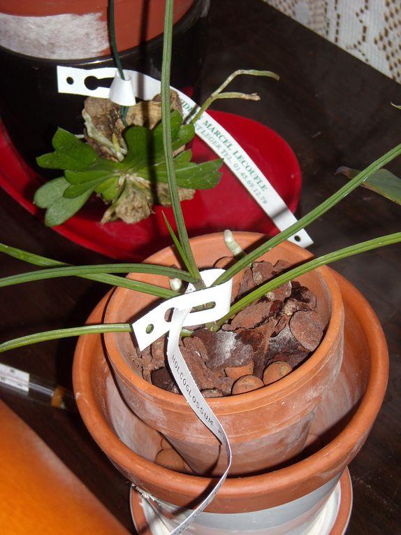 Toutes mes plantes que je cultive.