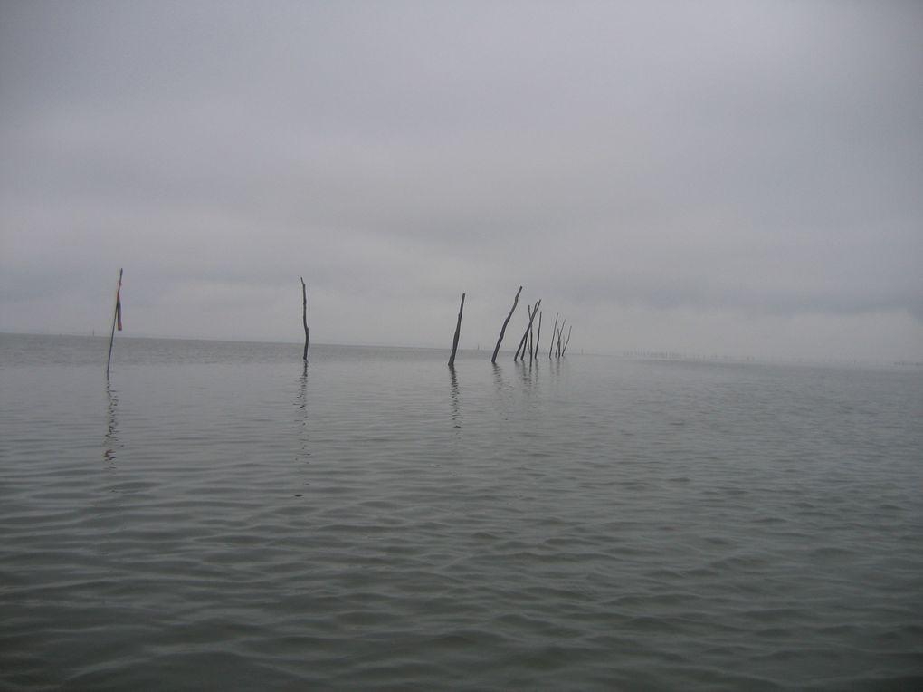 Sortie du Teich au Pyla.14 Janvier 2012