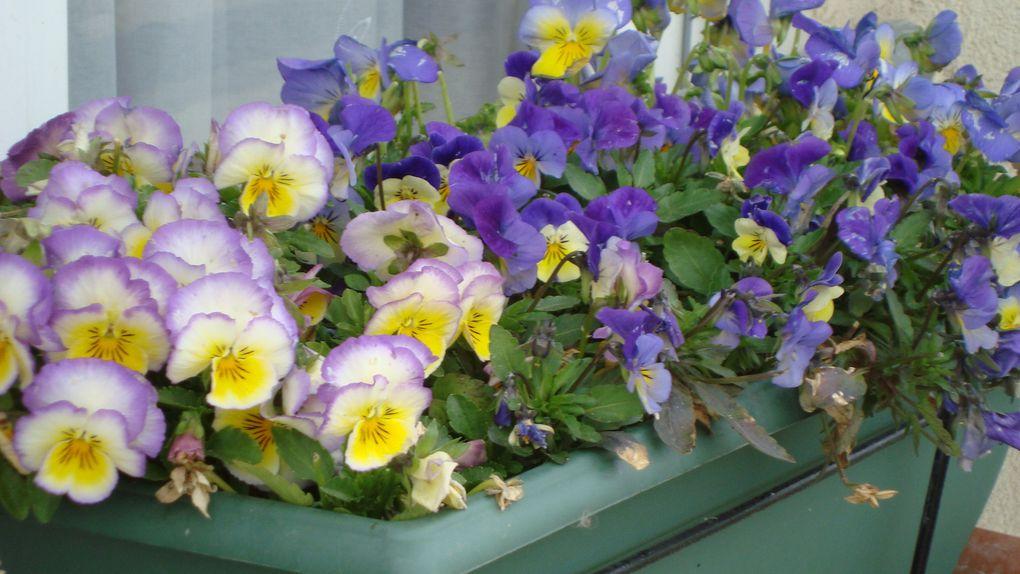 fleurs, nappes, nounours loisirs créatifs,