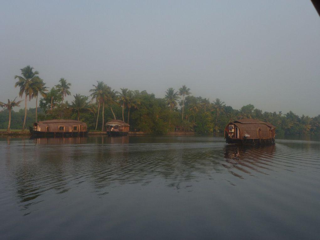 février 2012, sur les lagons du Kérala, croisière surles kétuvallams, les autres embarcations, la végétation