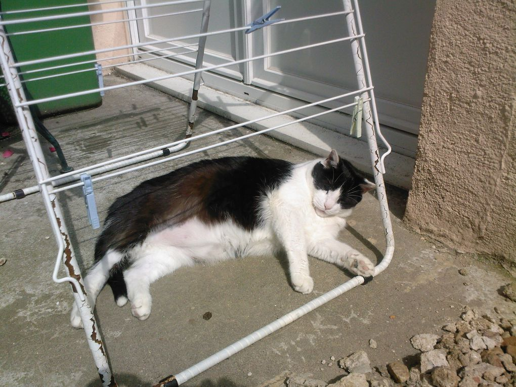 Album - Seglas-le-chat