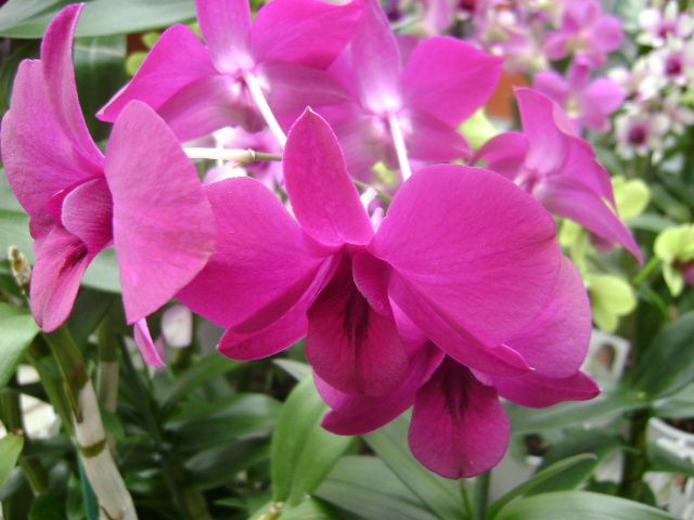 Album - orchidee