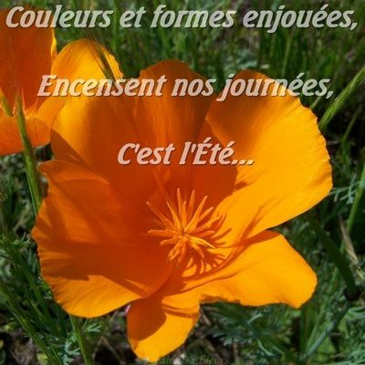 Album - nature-fleurs-et-arbres