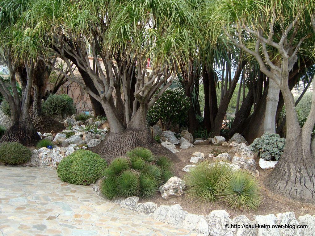 """Crée en 1895, le """"Jardin exotique"""" de Monaco regroupe des cactées et des plantes dites succulentes..."""