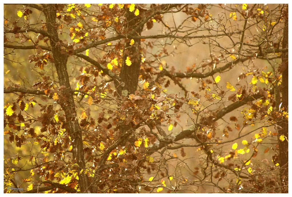 Album - Arbres - Nature