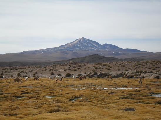 Album - Bolivia-Lipez-Uyuni