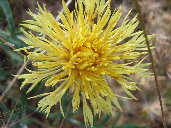 Album - Photos de fleurs sauvages prises à Lorgues